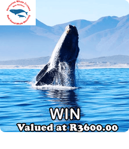 Hermanus Whales Prize Banner