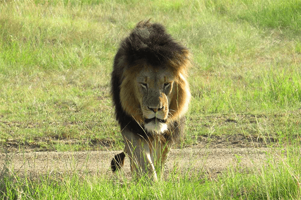 Nambiti Private Game Reserve