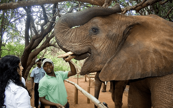 Elephant interaction with Key Shuttles & Tours