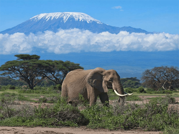 Elephant with Jaydans Premier Tours and Travel