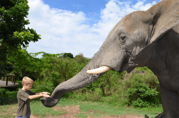 Interaction with elephant at Elephant Sanctuary The Crags