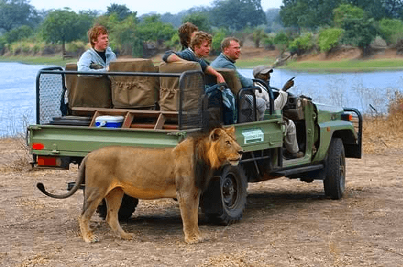 Safaris with Mile by Mile Tours